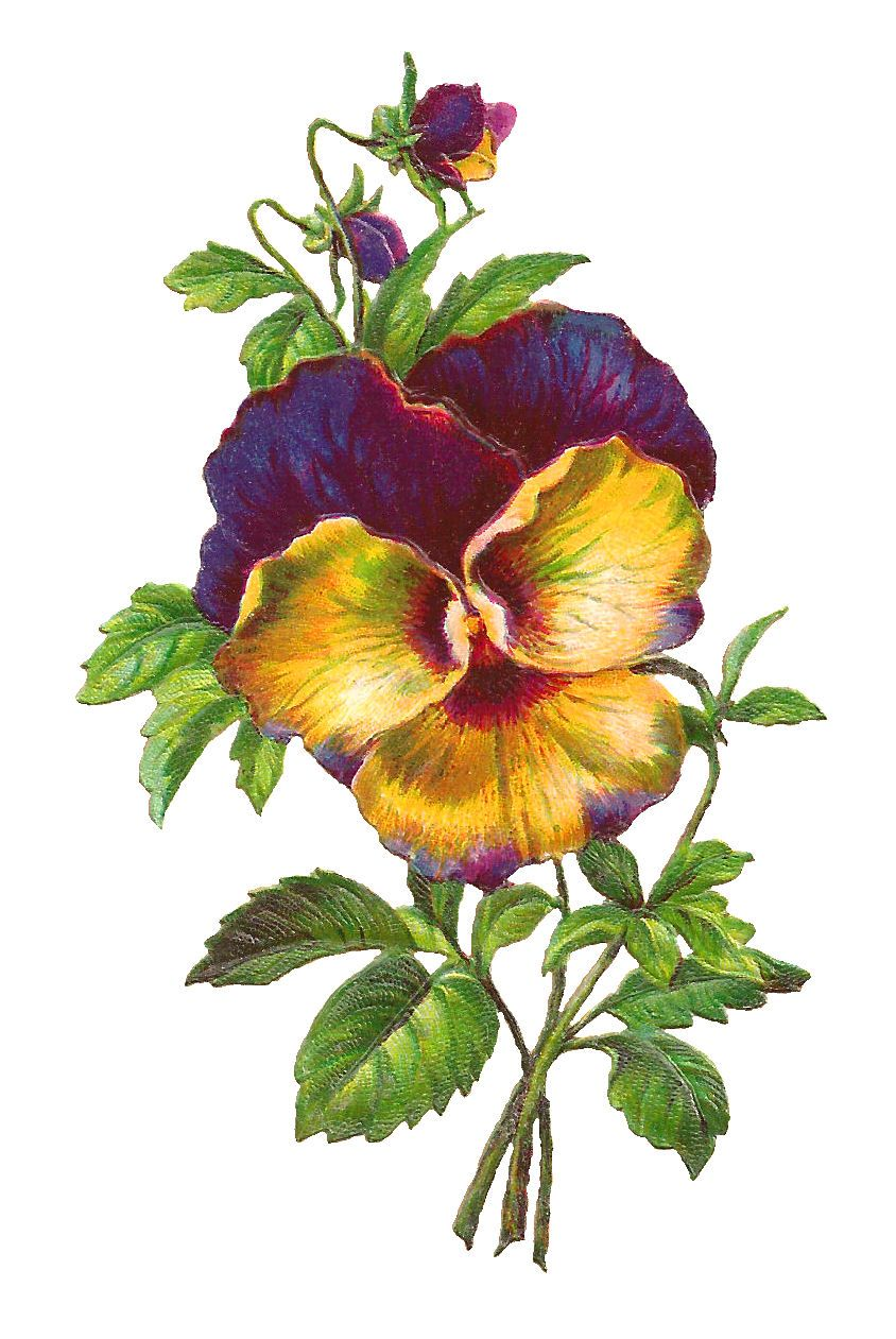 Free Pansy Download Purple Flower Image Pansies Flowers Flower Images Flower Painting