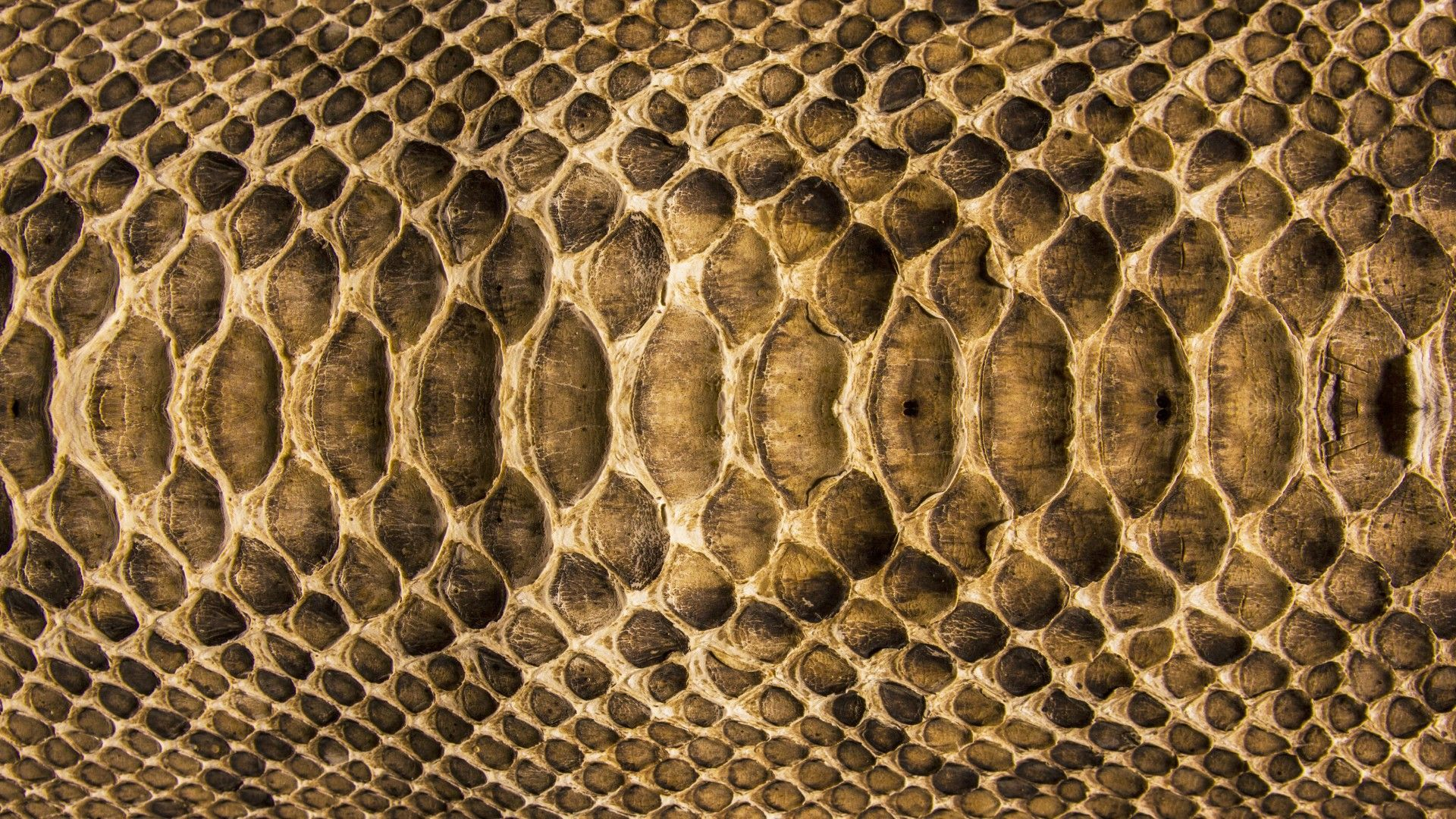 snake skin wallpapers : find best latest snake skin wallpapers in