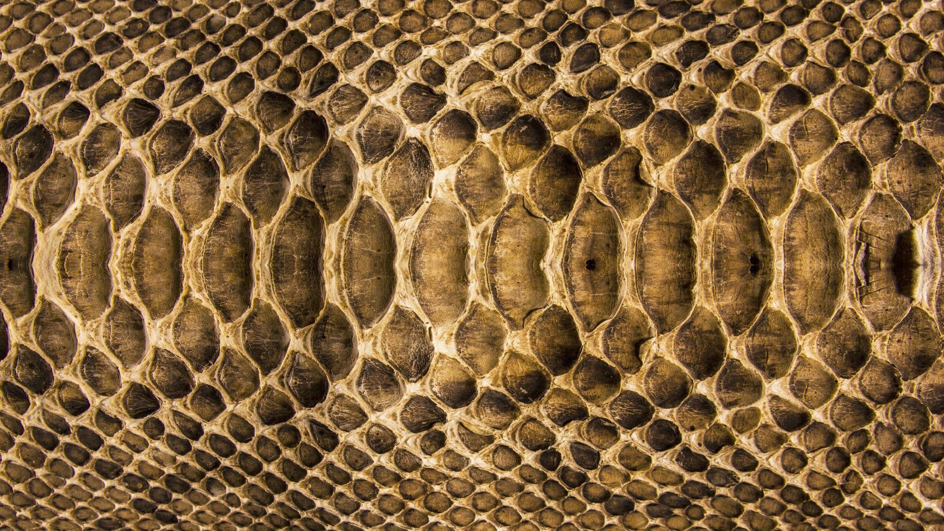 Snake Skin Wallpapers Find Best Latest Snake Skin