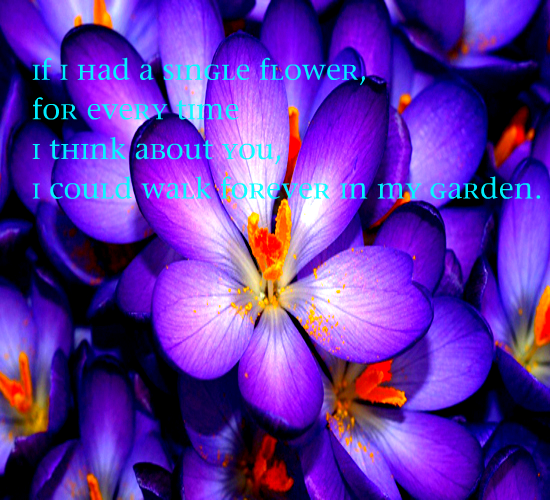 When I think about you...... If I had a single flower, for ...