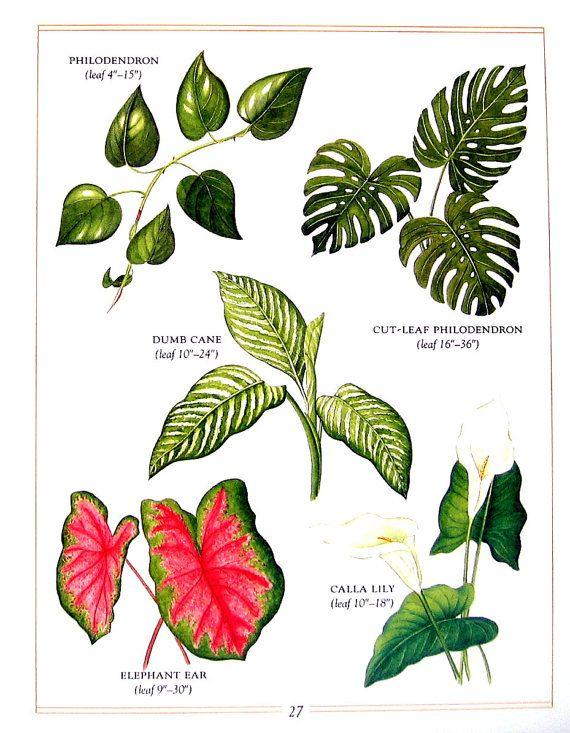 Botanical Print Beautiful Poisonous Flowers By Mysunshinevintage