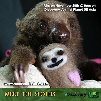 Dating a sloth
