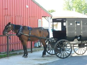 Vannetta Chapman answers FAQ about the Amish.