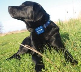 Best Dog Training Collar Choosing The Best Ecollar For Your Dog