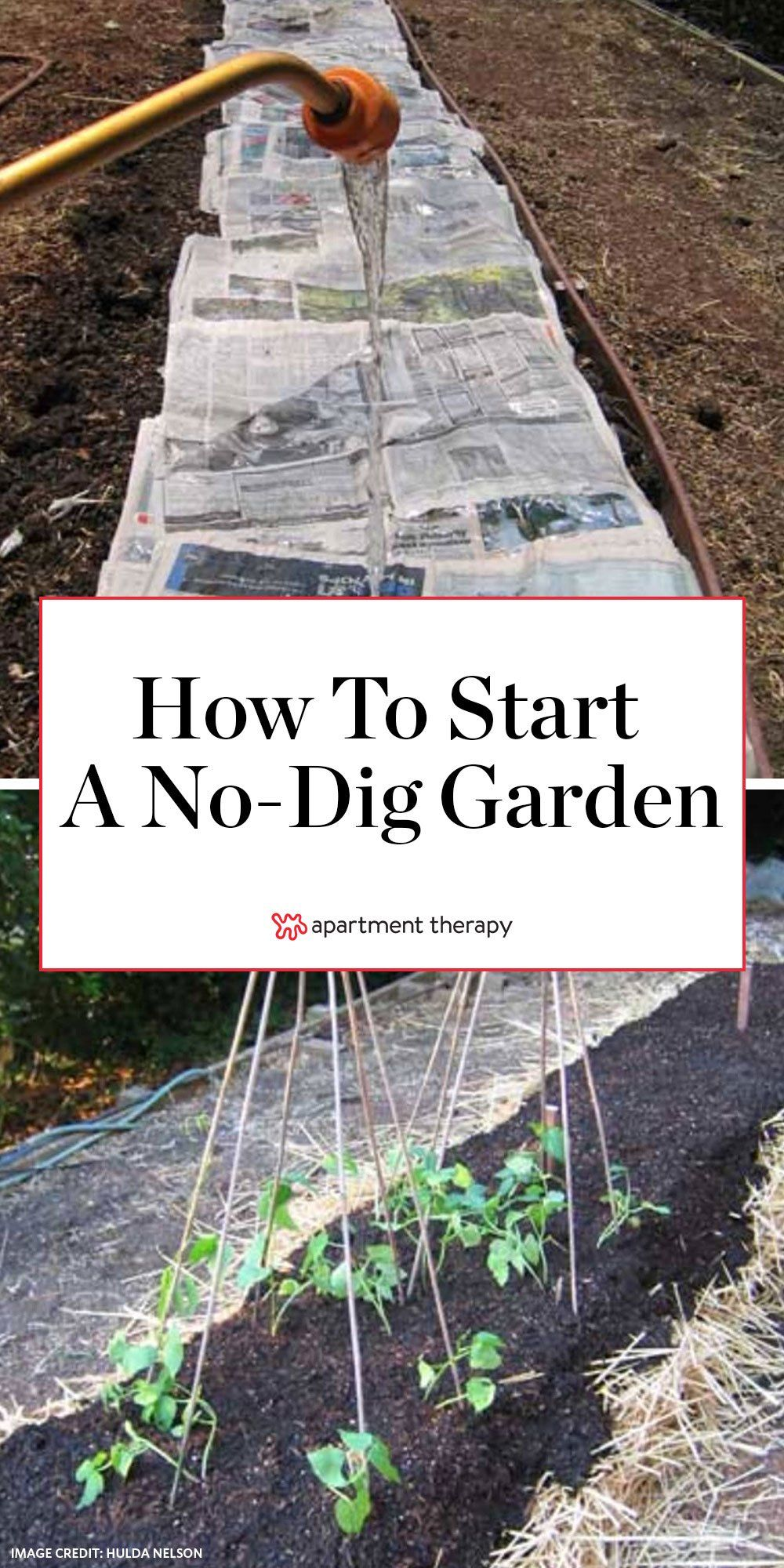 How To Start a NoDig Garden … Step by Step is part of Dig gardens, Starting a garden, Easy garden, Garden help, Veggie garden, Eco garden - A few weeks ago we blogged an article in the LA Times about NoDig Gardens  They require less water than traditional gardens and they're an easy way to start a raised bed  You can even start one right over a patch of grass you want to get rid of  Our friend and coworker, Hulda Nelson, tipped us off to the article  Then, last week she started her own nodig garden and helped us out with some step by step directions
