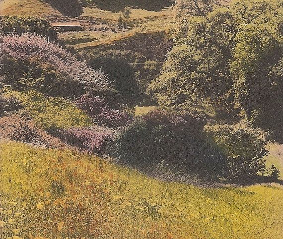 Art Nouveau Inspired California Poppy By Mason Larose: Poppies On A California Hillside Early 1900's