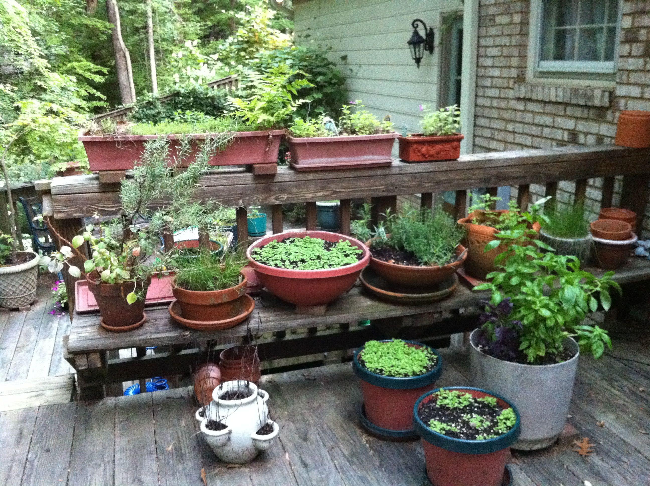 herbs on the deck outdoor herb garden kitchen garden potted plants patio on outdoor kitchen herb garden id=82995