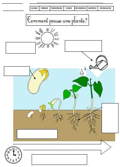 Dossier sur les v g taux croissance d une plante outils for Recherche sur les plantes vertes