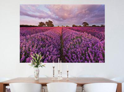 Lavendel Wallpaper Mural at AllPosters.com