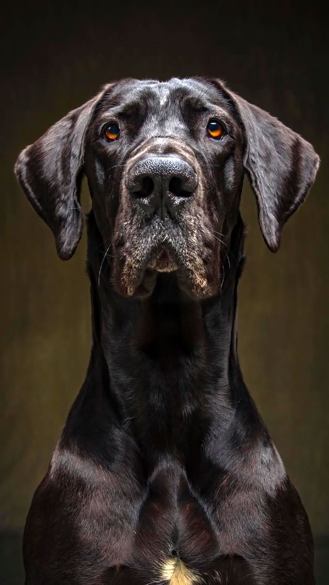 Dog Portrait Ig Vincentjmusi 1080x1920 I Imgur Com Submitted By Team Pancakes To Dog Photography Studio Dog Portrait Photography Pet Photography Studio