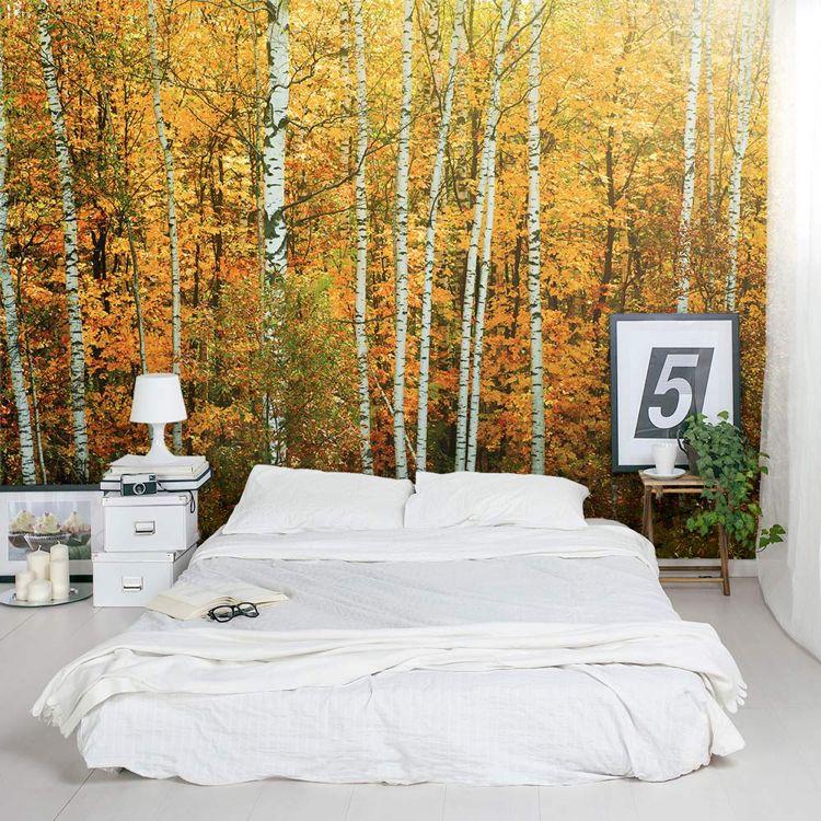 Birkenwald im Herbst als Fototapete Architektur Pinterest - fototapete wald schlafzimmer