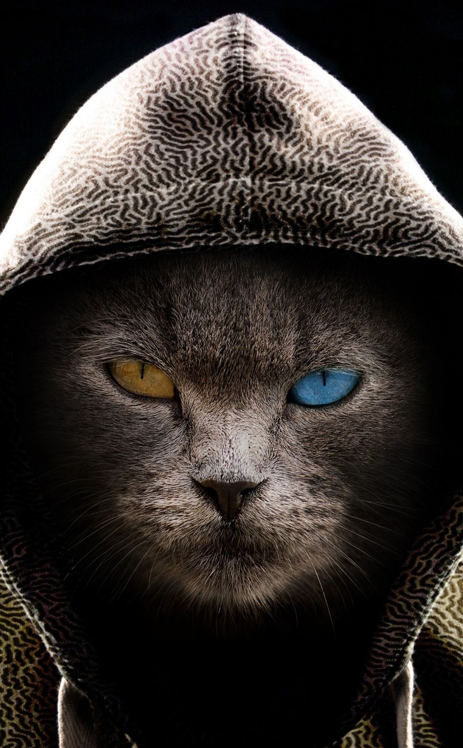 950x1534 Cat In Hood Colored Eyes Wallpaper Bad Cats Cat Wallpaper Iphone Wallpaper Cat
