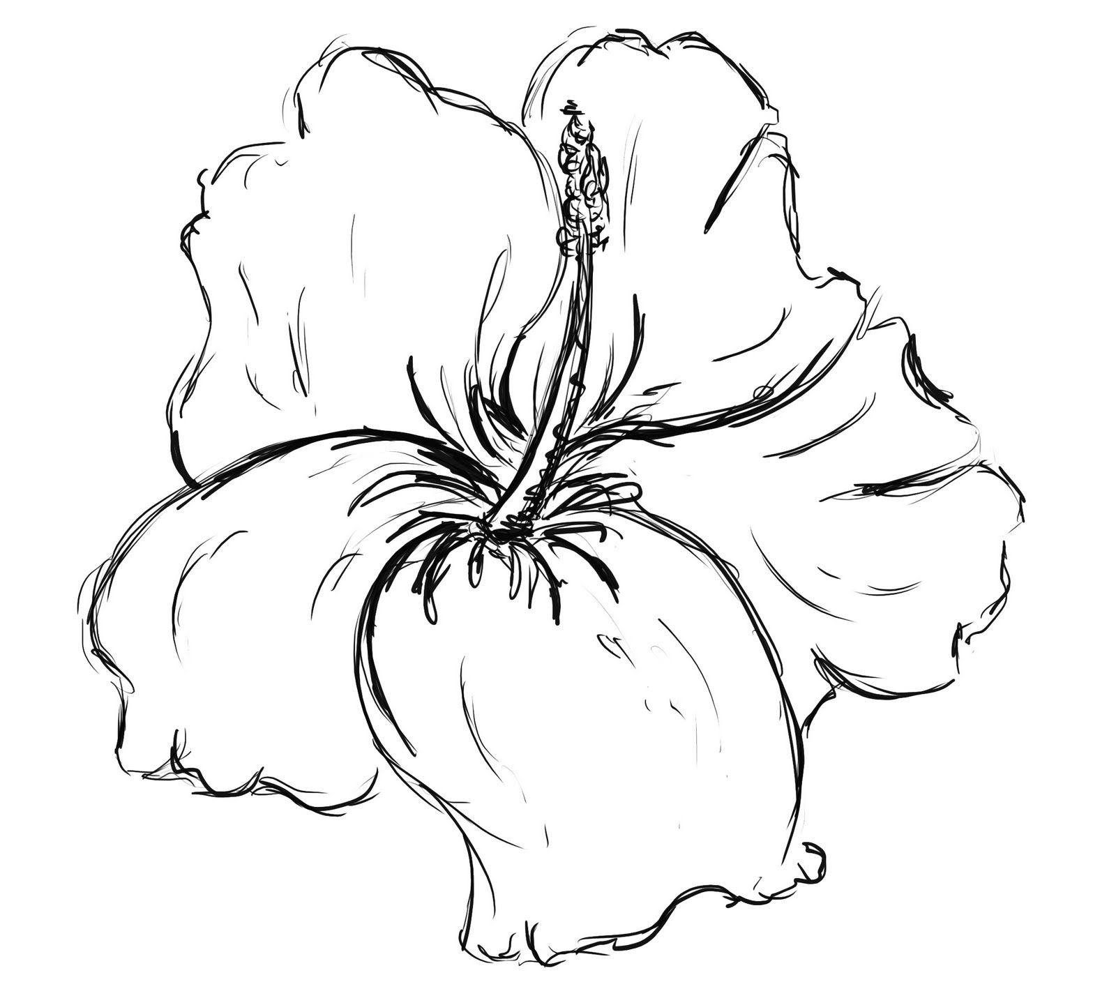 Hibiscus Sketch With Images Hawaiian Flower Drawing Flower