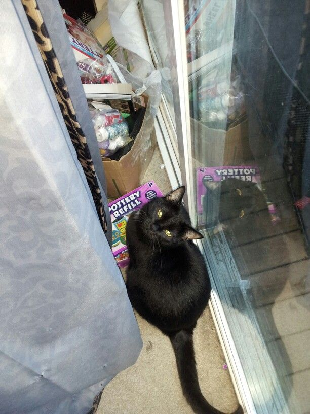 kitty behind a curtain