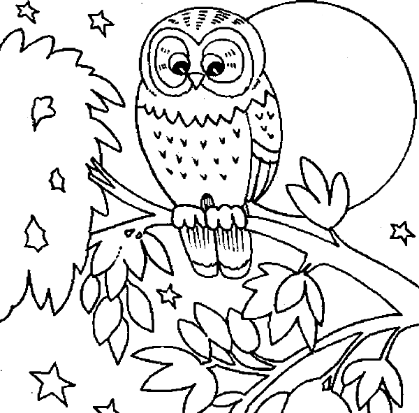 37e2b66236fced39381c26ab60359b27png - Cute Owl Printable Coloring Pages