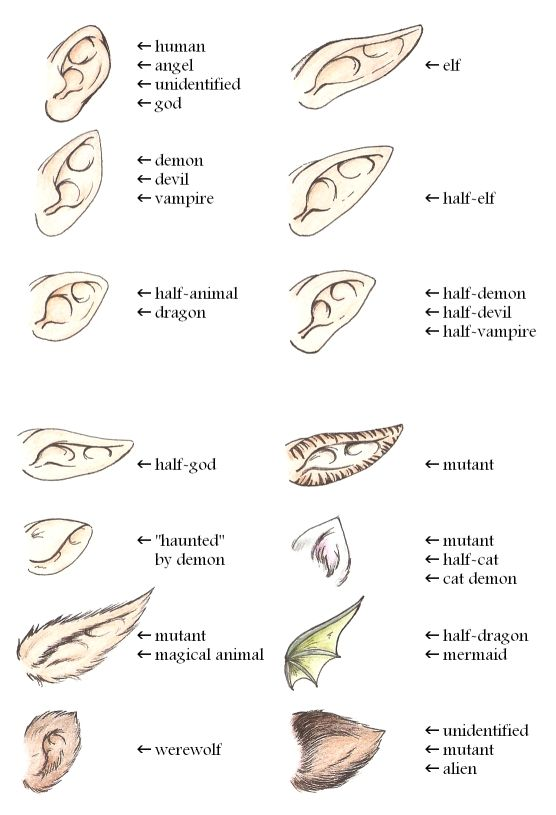 Ears Guide By Yume Art Reference Art Reference Poses Fantasy Drawings