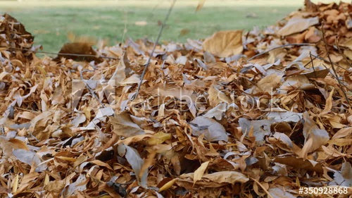 Stock Footage Of Close Up Of Brown Orange And Yellow Leaves Falling Into A Pile In A Park Explore Similar Videos At Adobe Stock