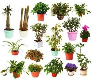 house plants expert a z index list of house plants great resource - Identifying Common House Plants