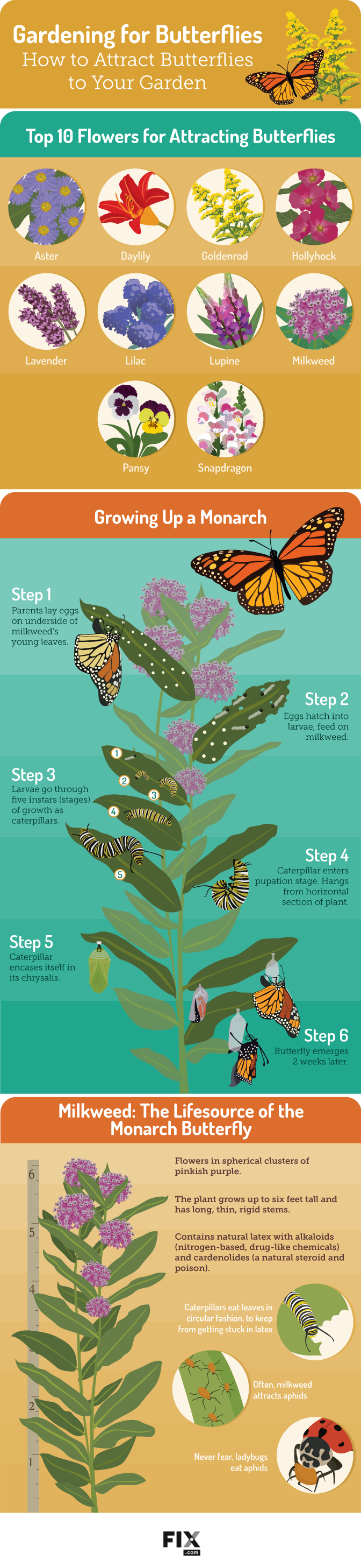 Gardening for Butterflies How to Attract Butterflies to ...