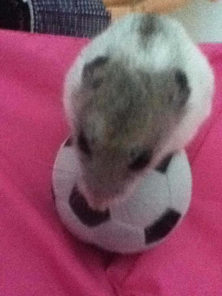 Twix the soccer player