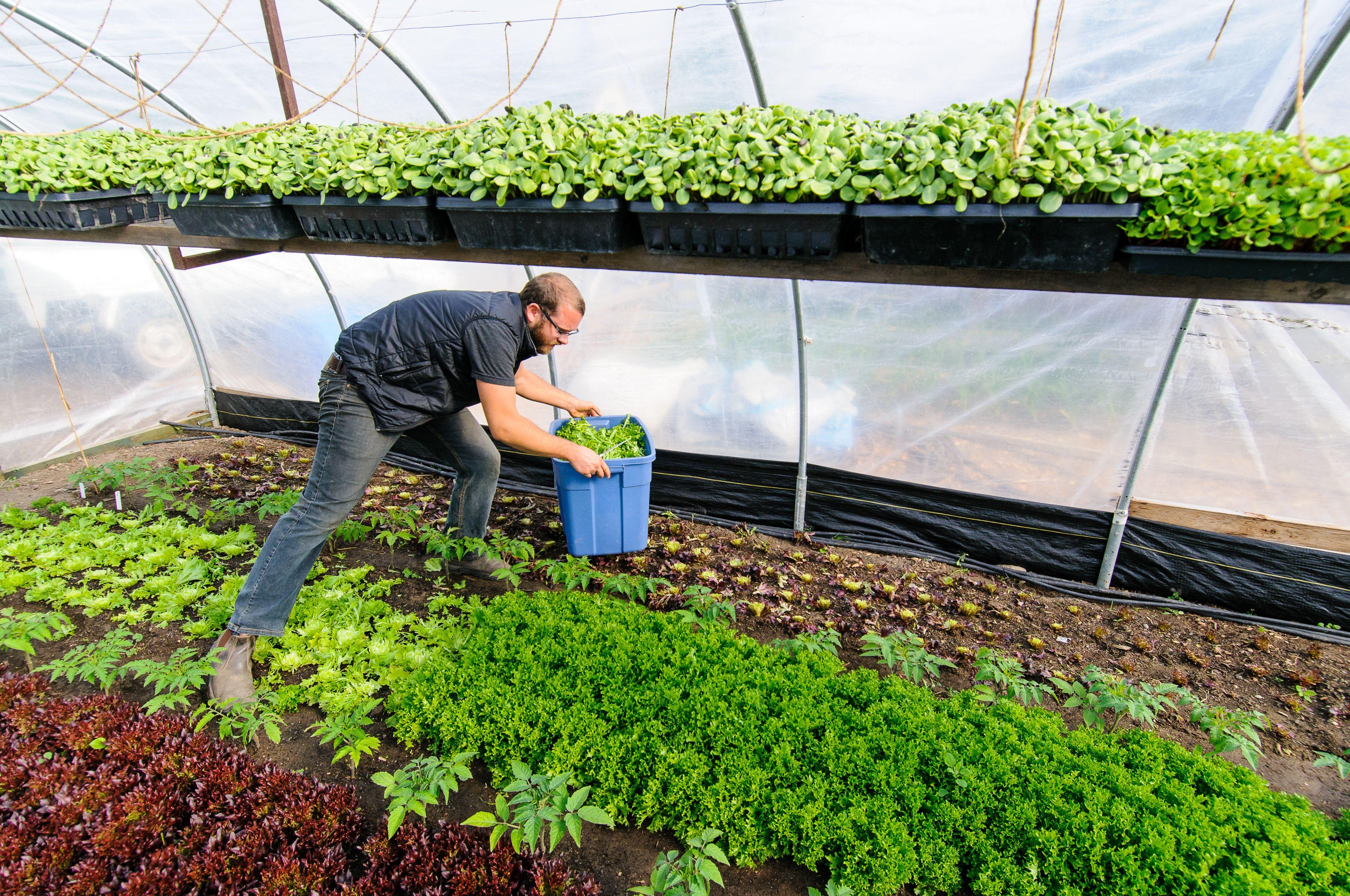 Urban Farmers Can Earn 75 000 On 15 000 Square Feet Civil Eats Urban Farmer Urban Farming Urban Agriculture Urban backyard farming for profit
