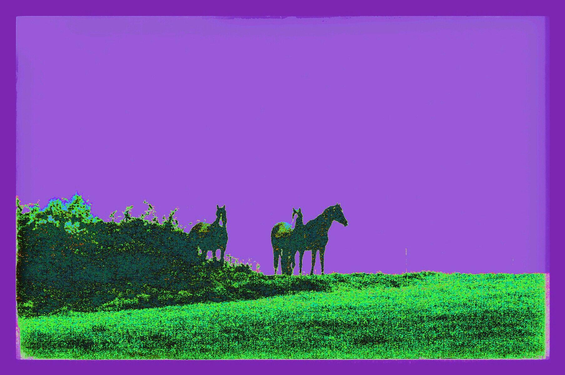 Variation en vert et mauve des chevaux à l'aube