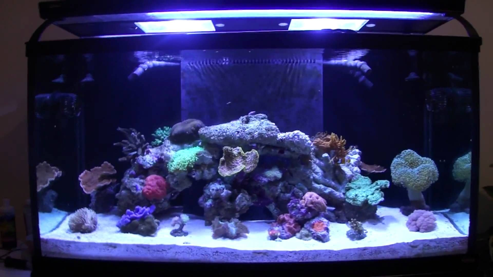Educational Video On How To Prevent And Deal With Green Hair Algae Growth  In Saltwater U0026 Reef Aquariums.