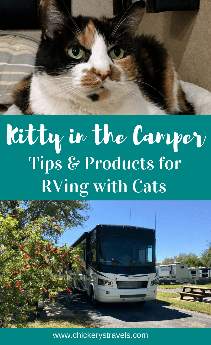Tips for Full-Time RVing with Your Cat Safely and Comfortably