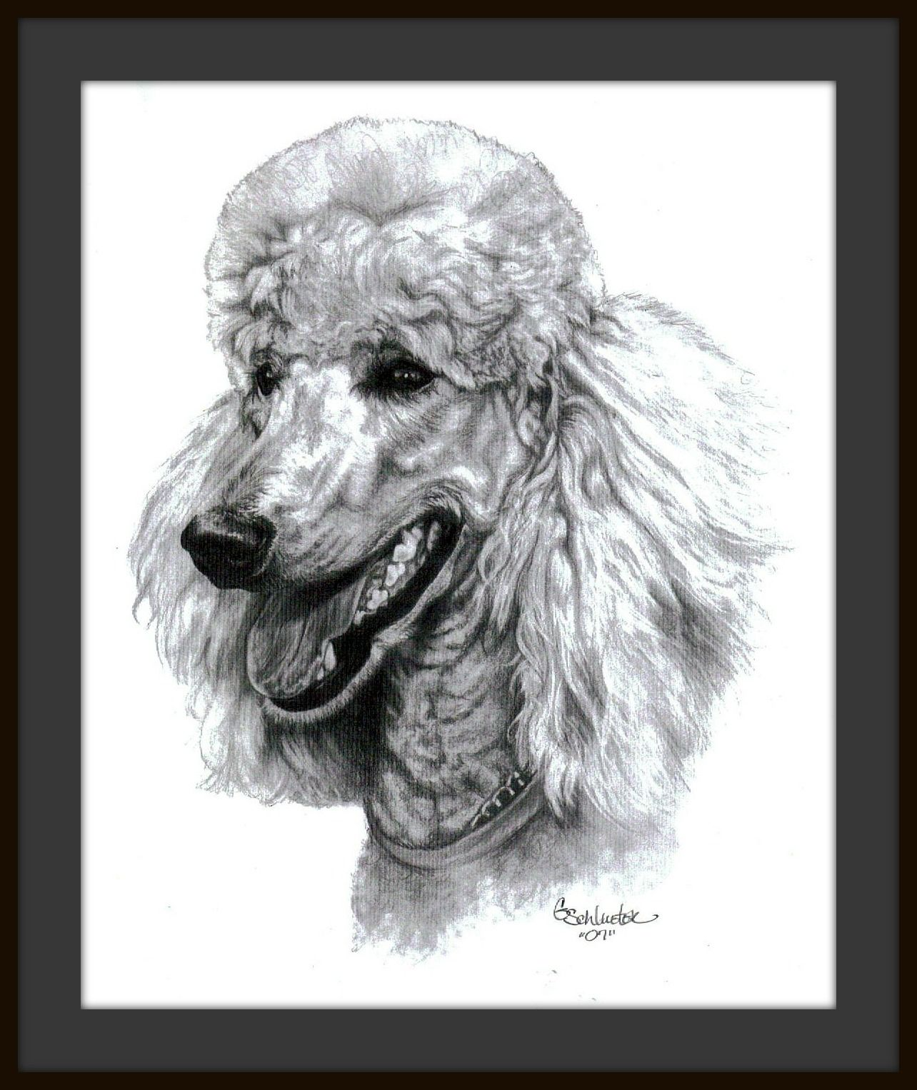Amber the Standard Poodle Sketch find more hand drawn