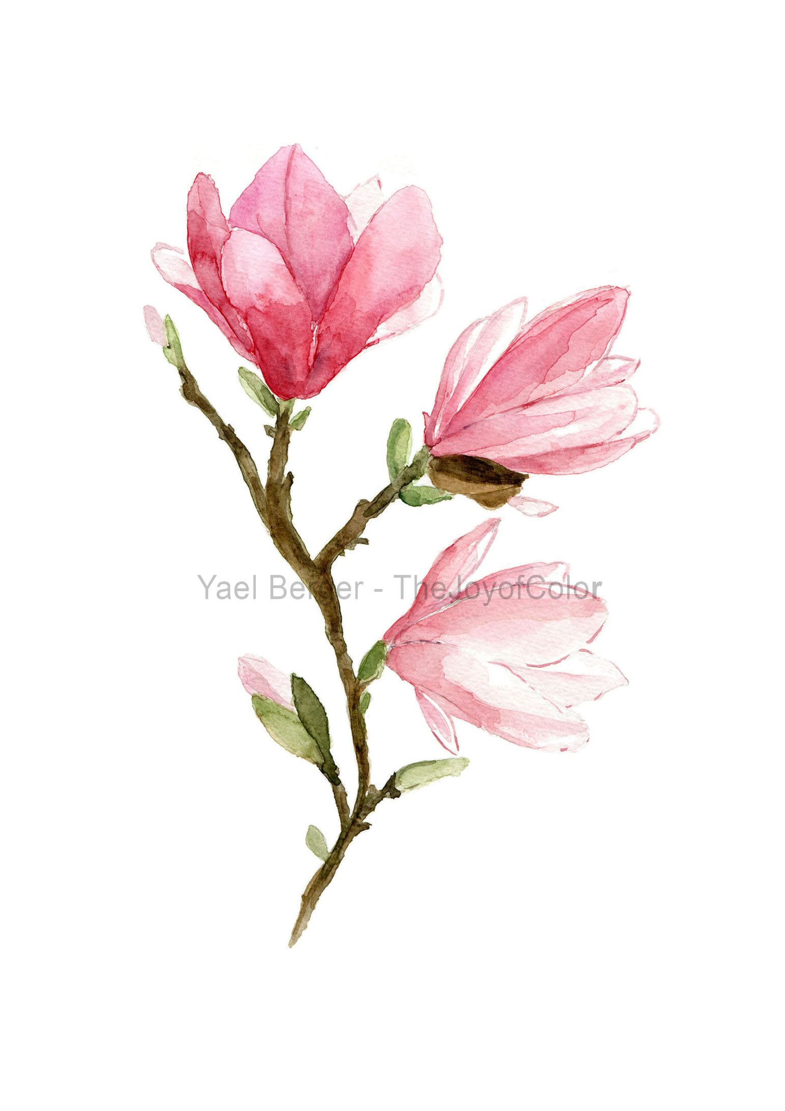 Magnolia By Sally Crosthwaite Flower Art Painting Flower Art Flower Painting