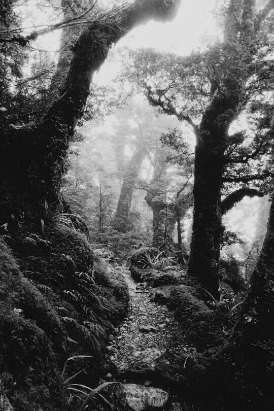 What inspires black white path in the misty forest en