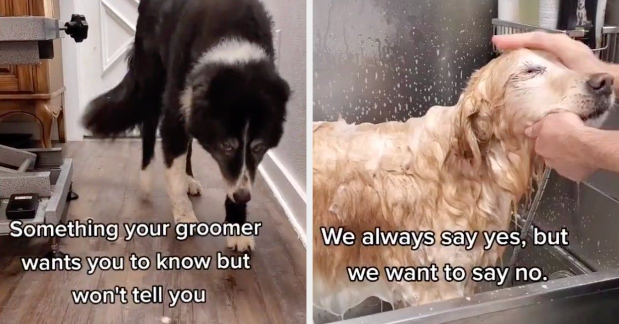 This Things Your Dog Groomer Won T Tell You Tiktok Is Going Viral Because The Message Is So Important Dog Groomers Dog Owners Dogs