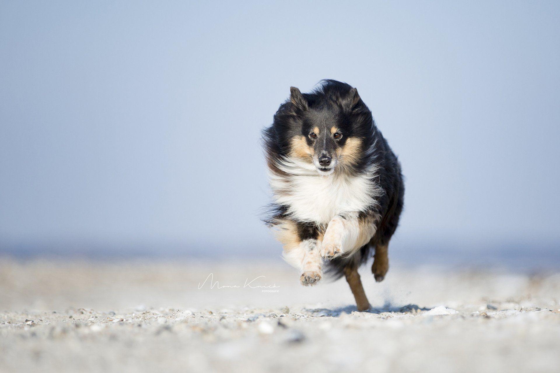 Pin Von Mona Knick Fotografie Auf Hundefotografie Mona Knick Fotografie In 2020 Tiere Hunde Fotos Hundefotos