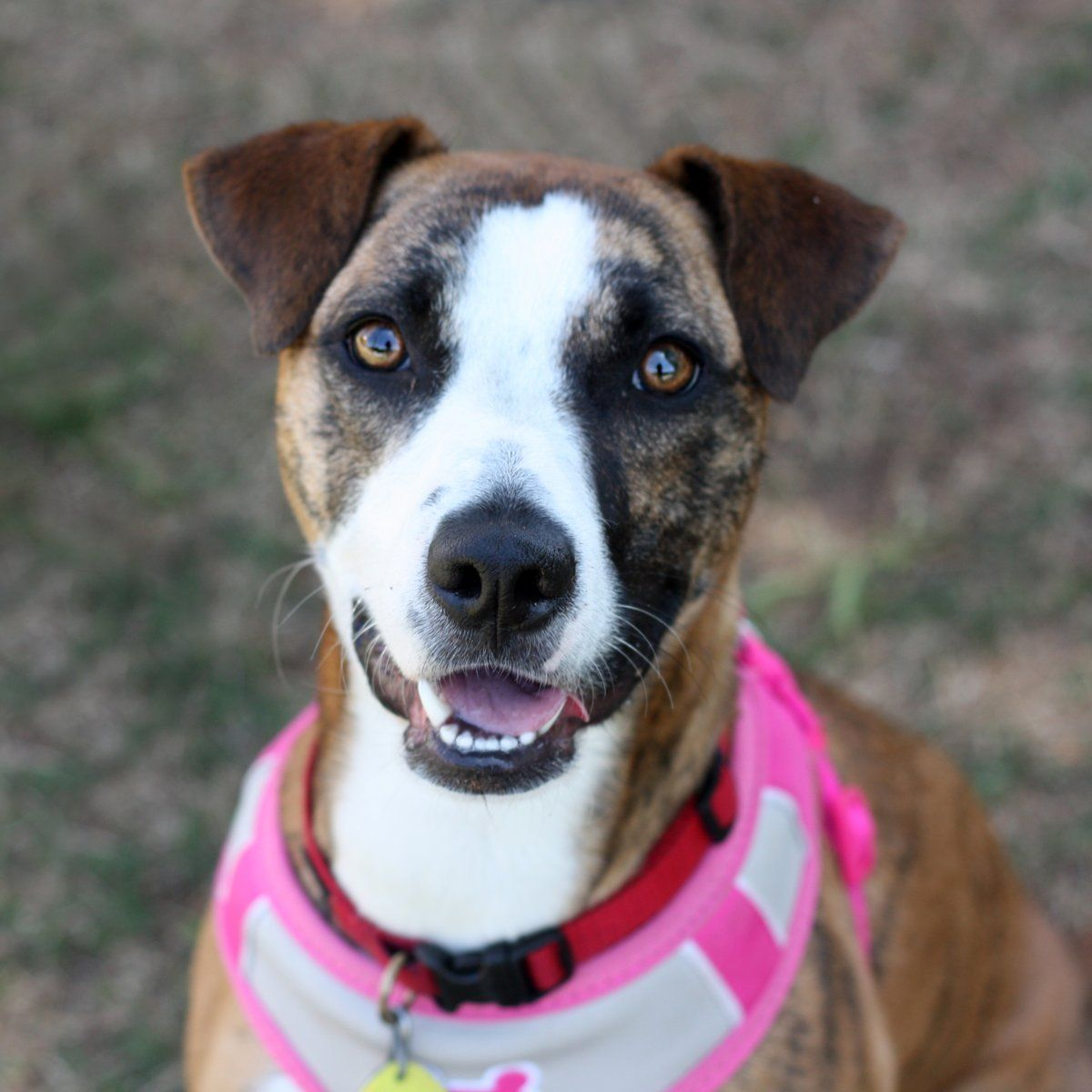 Atlanta Pet Rescue Volunteer