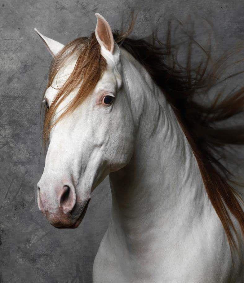 Gorgeous horse color! Especial IV