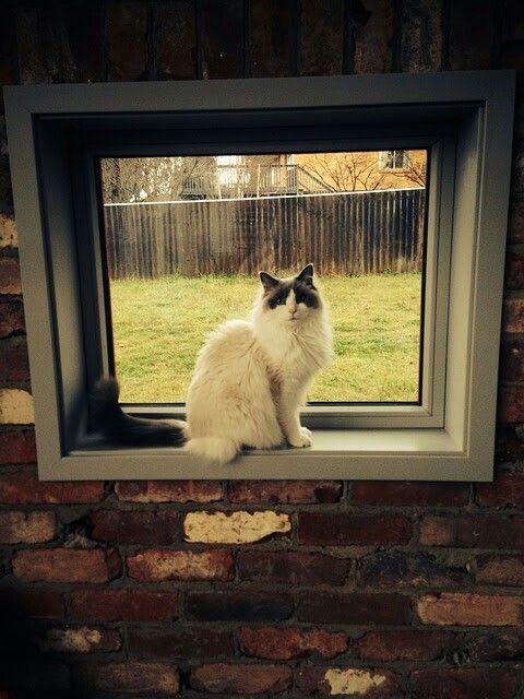 framed in the window