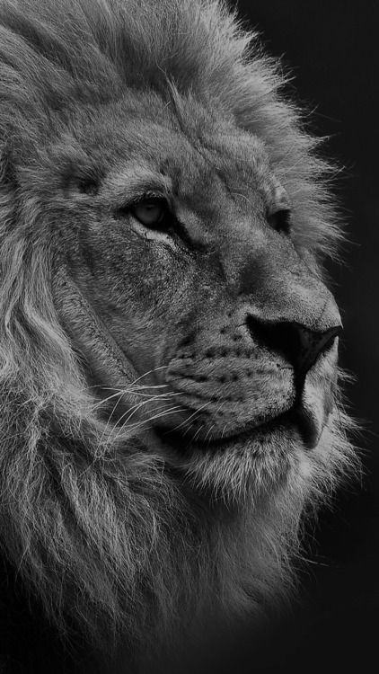 Iphone 7 Wallpaperhd Tumblr 316 Avec Images Fond D Ecran Android Animation Animaux Animaux Mystiques