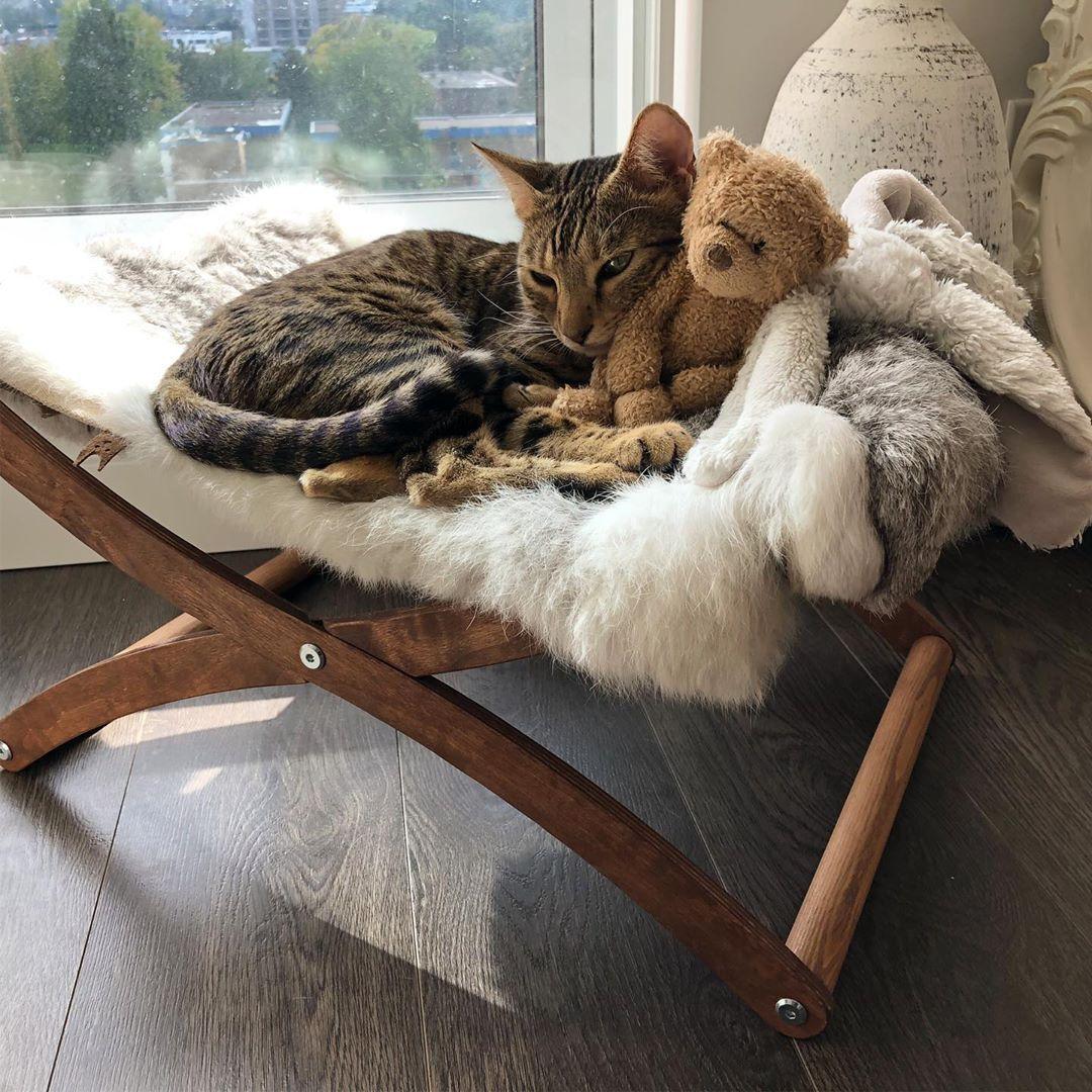 Furniture Cat Hammock At Home In 2020 Cat Hammock Cat Bed Cat Room