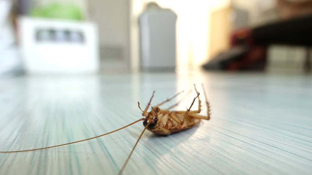 Pest Infestation at Home: Call Professional Services in Austin