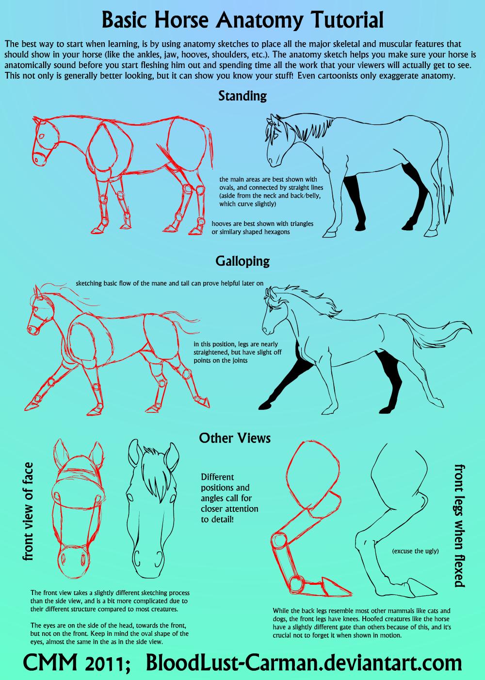 Horse Anatomy Tutorial by BloodLust-Carman.deviantart.com on ...