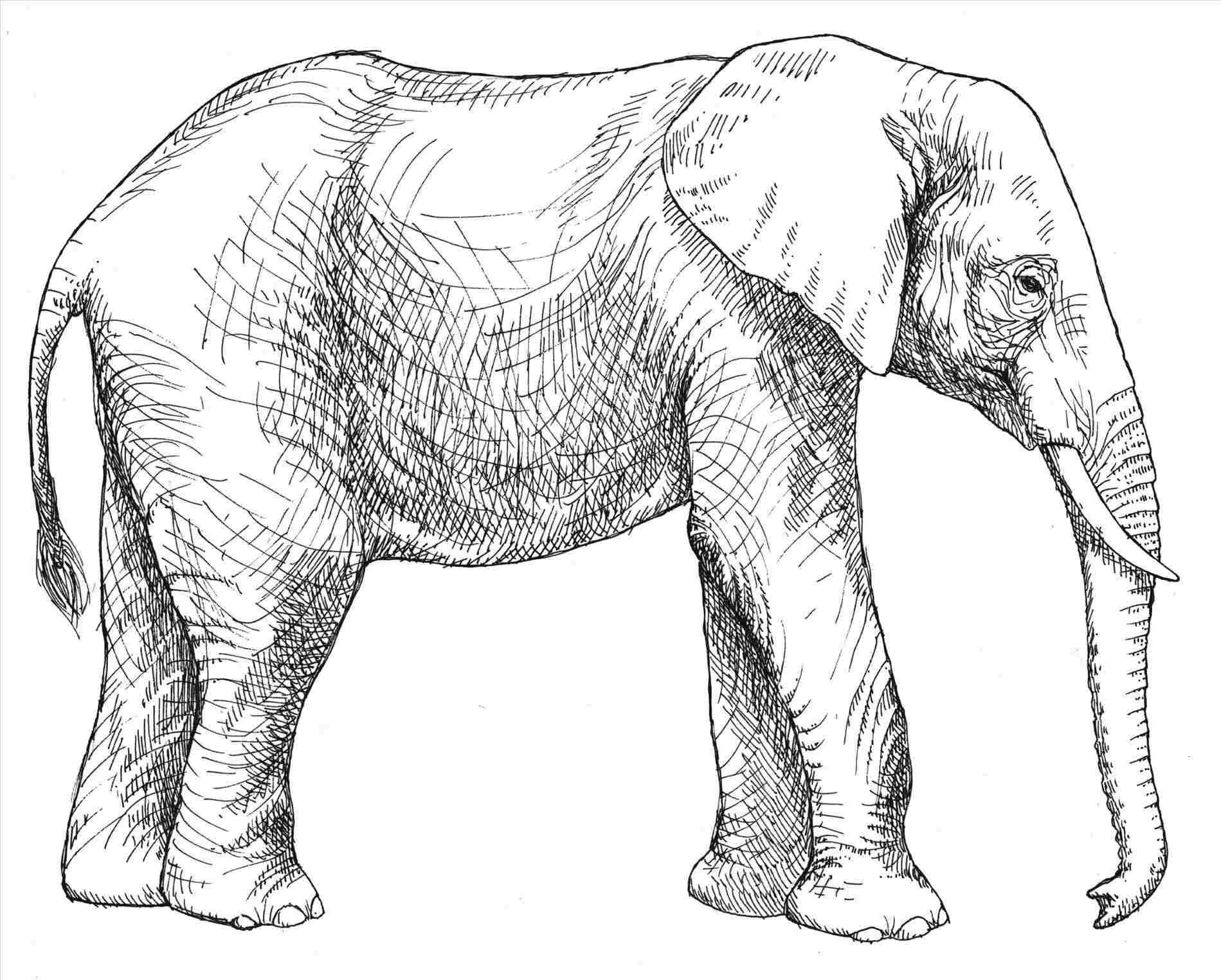 Easy Elephant Coloring Pages Ideas For Beginners ...