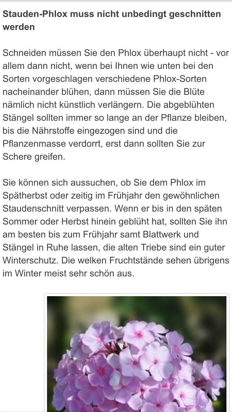 Phlox Pflege Gartenideen