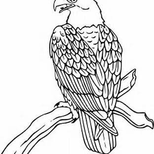22++ Bald eagle clipart black and white ideas