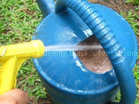 Practical Gardening Apply Homemade Fish Emulsion 400 x 300