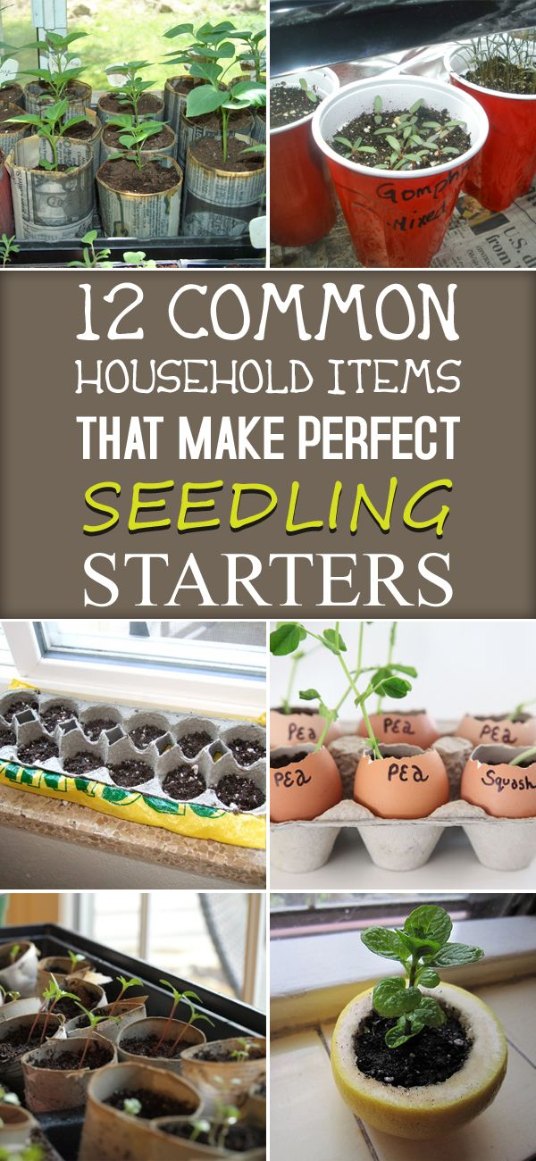 12 Common Household Items That Make Perfect Seedling Starters