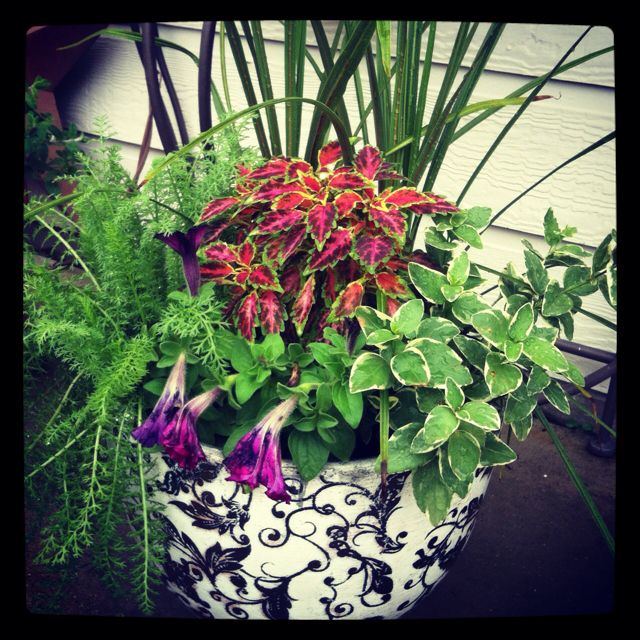 Container Gardening, Container