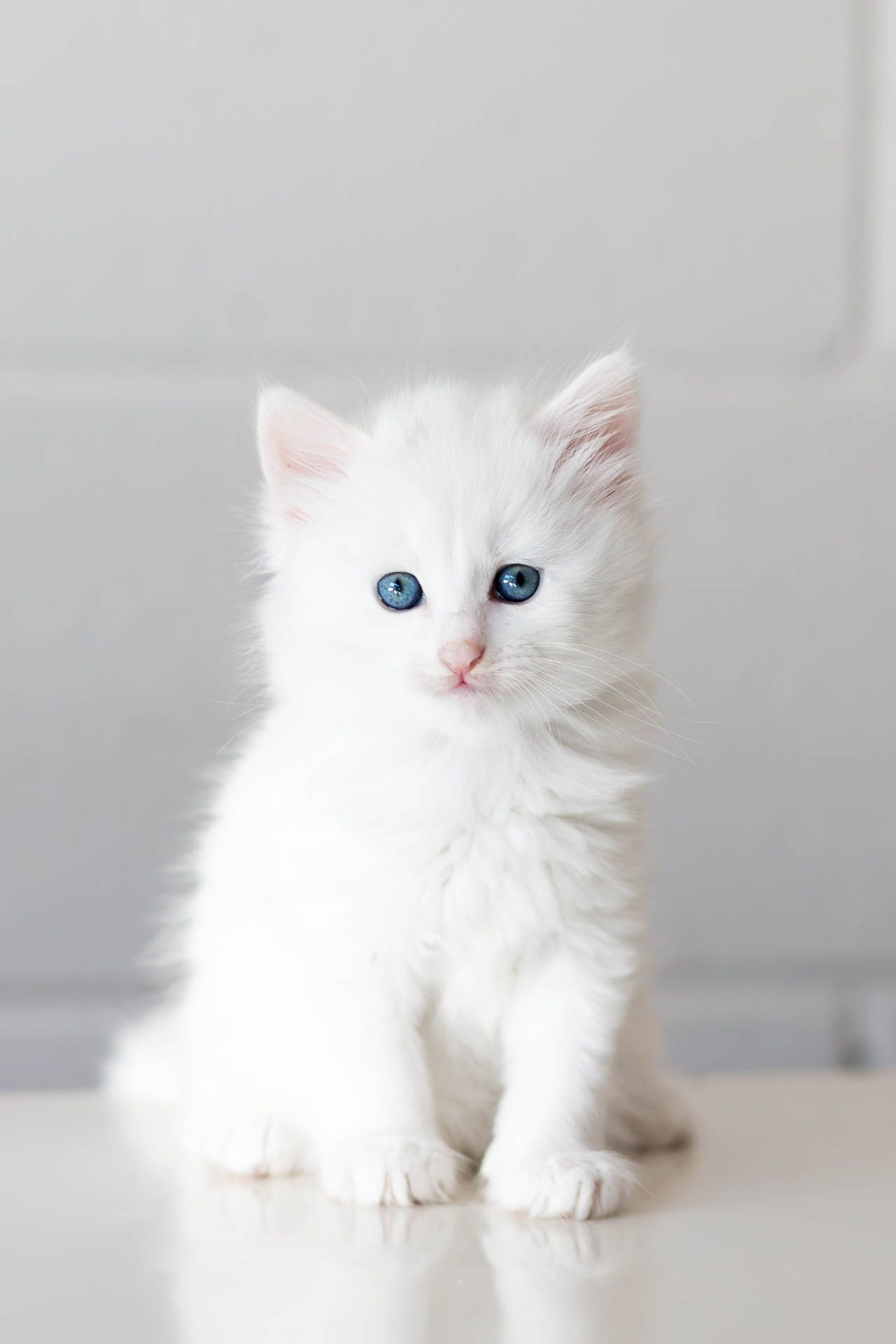 This 5 Week Old Kitten Called Sugar Just Arrived At My Shelter I Don T Think She Ll Have To Wait Very Long To Find A Home O Cute Cats Pretty Cats Baby Animals
