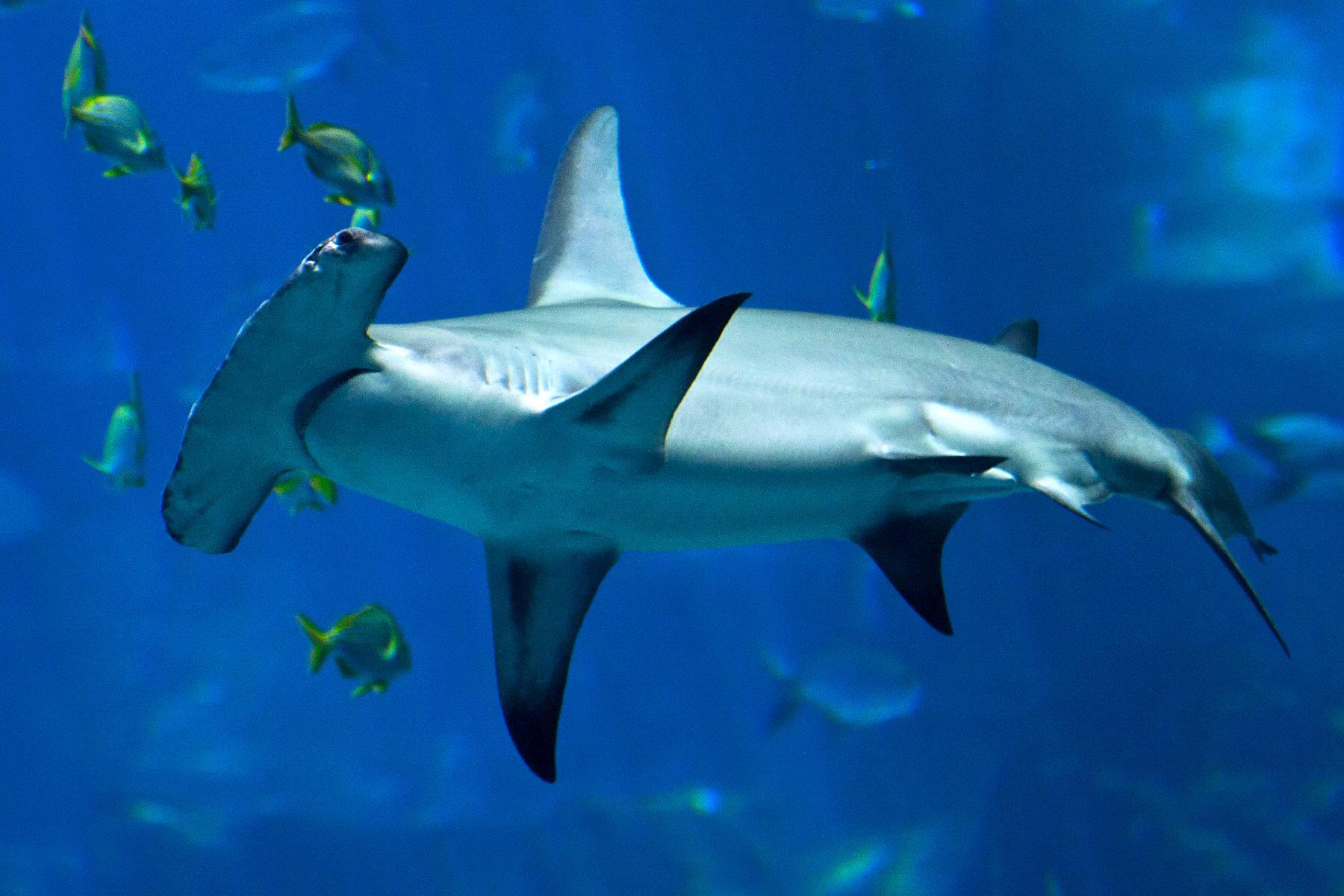 mediterranean sharks google search prom season at sugar soul