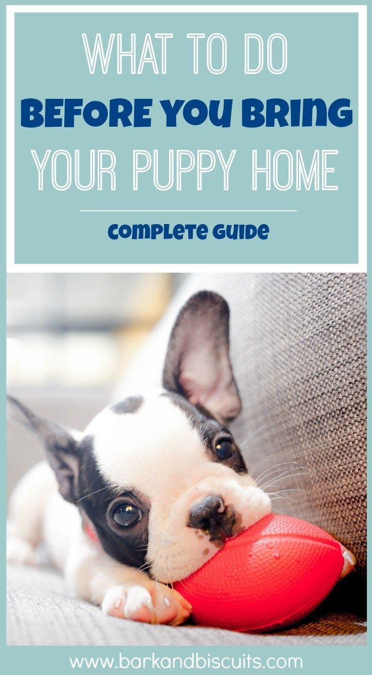New Puppy Guide - What To Do BEFORE You Bring Puppy Home - Bark and Biscuits