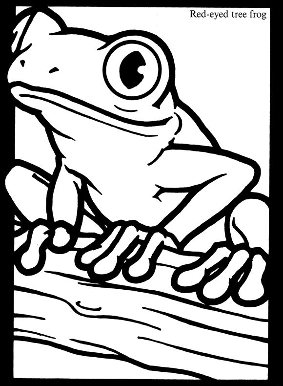 Free Red Eyes Tree Frog Coloring Page Frog Coloring Pages